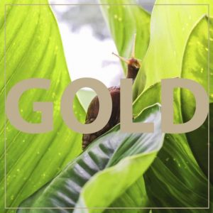 Trattamento Rigenera Gold Bava di Lumaca