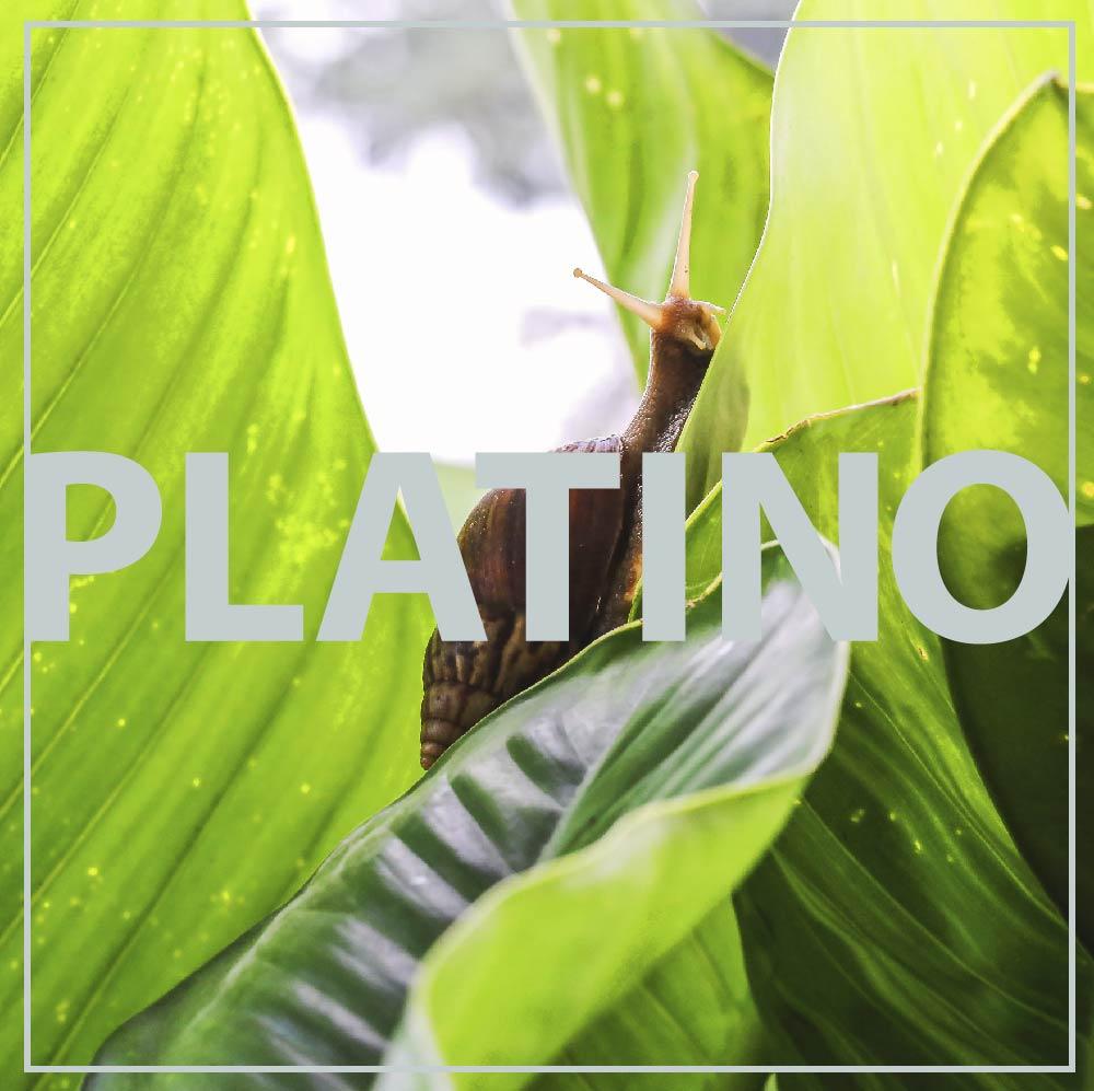 Trattamento Rigenera Platinum Bava di Lumaca