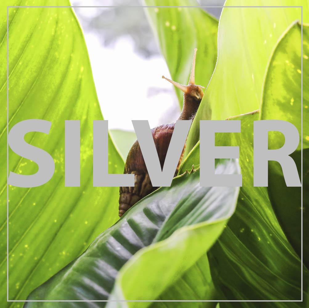 Trattamento Rigenera Silver Bava di Lumaca